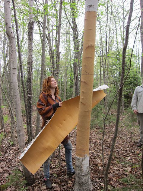 building a birch bark canoe | neat things to build | Pinterest ...
