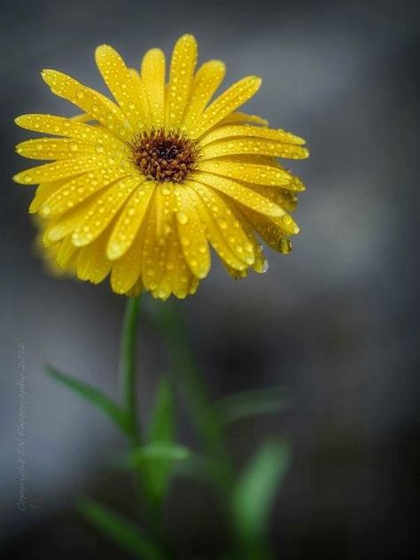 Pin By Patty Kearns On Daisies Flowers Beautiful Flowers Yellow Flowers