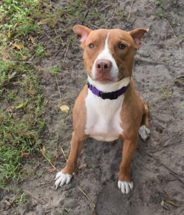 Pin On Florida Animals In Need Share Adopt Foster Save