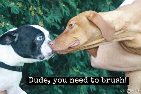 Brush your dog's teeth at least 1 to 3 times per week if you can.  Don't know how? Let us show you how:  www.youtube.com/denherdervet.
