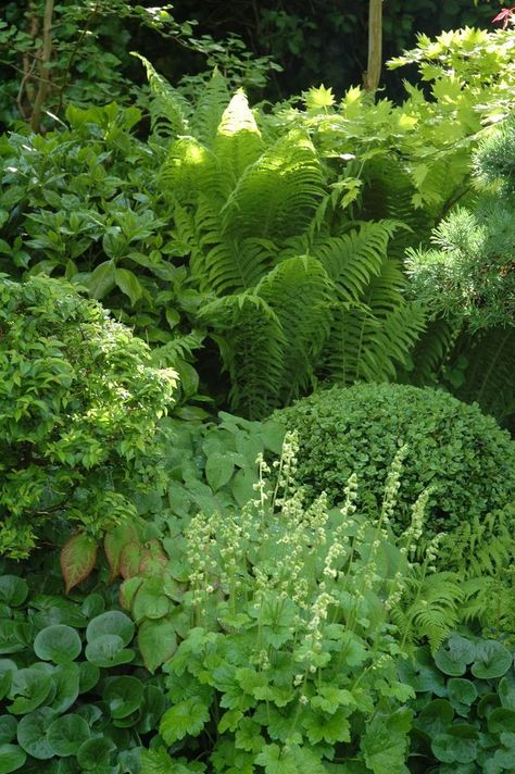shade garden w/ hosta, fern, lady's mantle, boxwood, wild ginger & more