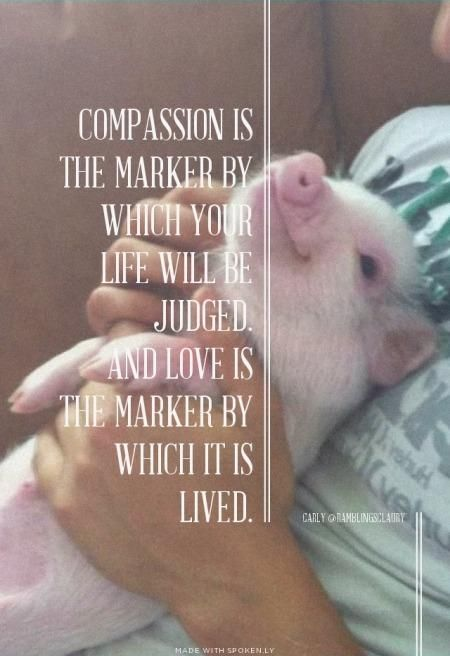 Compassion is the marker by which you life will be judged; and love is the marker by which it is lived compassion love animals pigs Beautiful Creatures, Animals Beautiful, Cute Animals, Baby Animals, Animal Agriculture, Vegan Quotes, Stop Animal Cruelty, Vegan Animals, Pet Memorials
