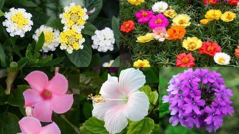 Coltivare Fiori.10 Magnifici Fiori Da Coltivare In Pieno Sole Coltivare I Fiori