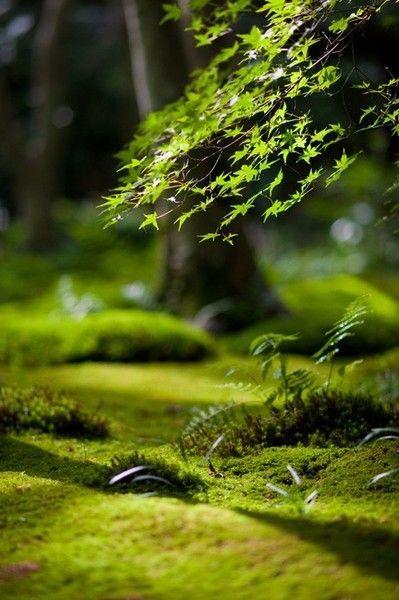 Https Www Zenelit Com Zen Attitude Nature Beautiful Animaux Mignon Chat Chien Lapin Libre Zen Yoga Bien Et Belle Nature Photographe Nature Jardin De Mousse