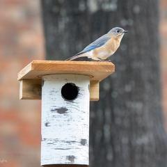 Gilbertson Nest Box Nabs Approved In 2020 Bird Houses Perennial Garden Design Nesting Boxes