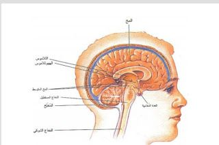 بيولوجيا الانسان جهاز الاعصاب Human Biology The Nervous System Biology Movie Posters Poster