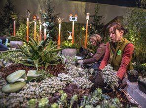 2014 Northwest Flower U0026 Garden Show In Seattle | Plants U0026 Gardening |  Pinterest | Gardens And Plants