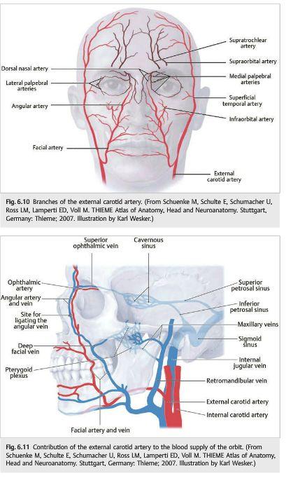 Injection Diagram | אספקת דם פנים | Pinterest | Dermal fillers