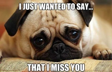 19 New Funny I Miss You Meme Template 2020 Missing You Memes Miss You Funny I Miss You Meme