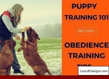 Tips For Dog Agility Training And Pics Of Training Tips For Great