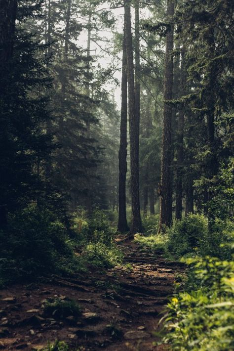Being in nature is rejuvinating, and science backs that up. Here are three tips to get you started with Japanese forest bathing to relieve stress.