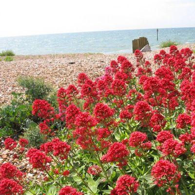 Przedmioty Uzytkownika Akex Albamar Strona 2 Allegro Pl Plants Red Peppercorn Red