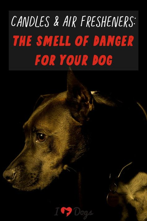 Candles Air Fresheners The Smell Of Danger For Your Dog Dogs