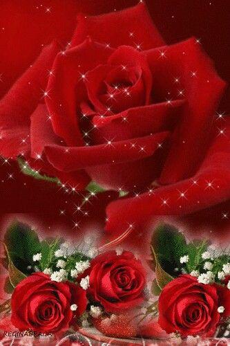 Pin De Dorinda Moya En Imágenes Con Movimiento Rosas