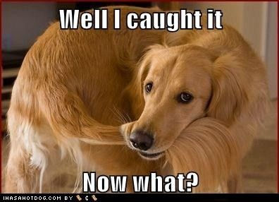 List Of Pinterest Golden Retriever Funny Quotes Life Pictures
