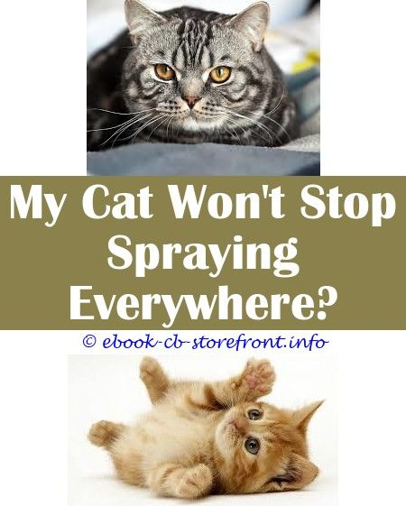 5 Innovative Tips And Tricks Can You Spray Advantage For Cats On Funiture Can You Spray Water At A Cat Cat Litter Attractant Spray How To Get Aerosol Sensible
