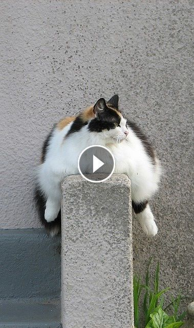 You Will Get A Laugh Attack From Watching These Funny Cat And Dog