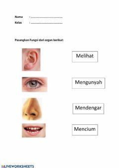 Primary Bahasa Indonesia Lote Worksheet Dengan Gambar
