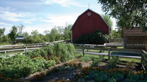 Michigan's Farm Garden