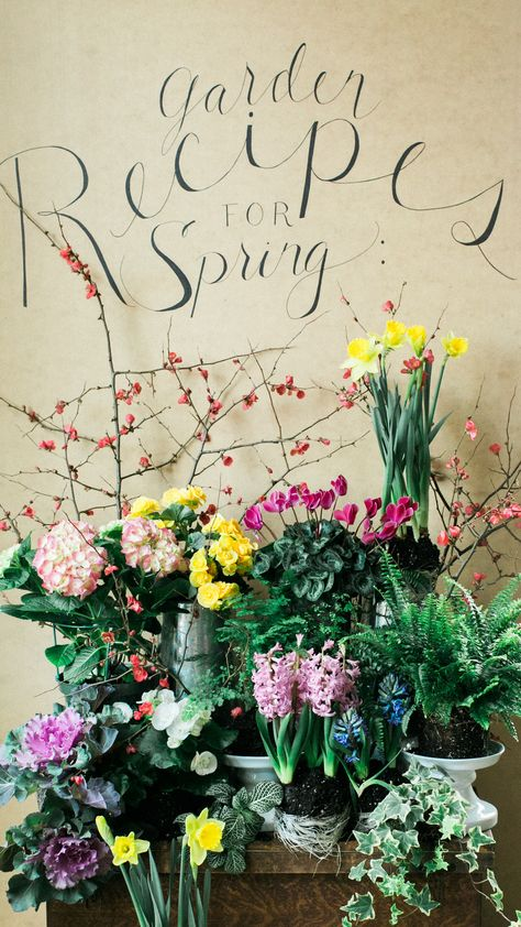 28 days of Container Gardens for Spring with Carmen Johnston Gardens: Phalaenopsis Orchid, Fittonia, Lemon Button Fern
