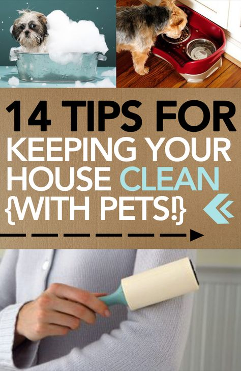 14 Tips for Keeping Your House Clean {With Pets!} -