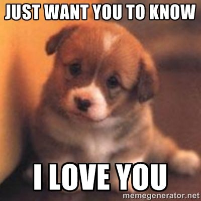 Just Want You Know I Love You Memes Love You Meme Cheer Up Pictures Puppies