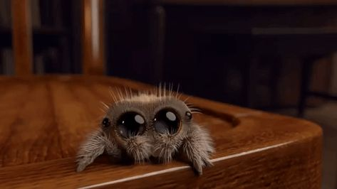 Adorable Animated Short About a Cute Little Spider Named Lucas