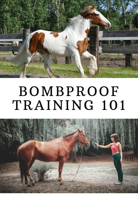 to Bombproof Your Horse Is your horse ready for anything? If not, check out our complete guide for bombproofing your horse!Is your horse ready for anything? If not, check out our complete guide for bombproofing your horse! Horse Riding Tips, My Horse, Horse Tips, Riding Gear, Dressage, Reining Horses, Appaloosa Horses, Friesian, Horse Information