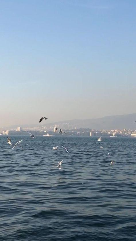 priya.nigam on Instagram: #nofilter #seagulls #izmir #photography #iphonex #travel #travelgram #priyasclicks #instatravelling #memories #travelblog #traveltheworld…