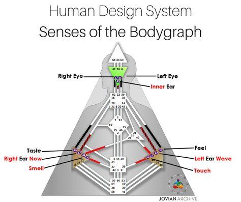 330 Human Design Ideas Human Design Human Design System Human