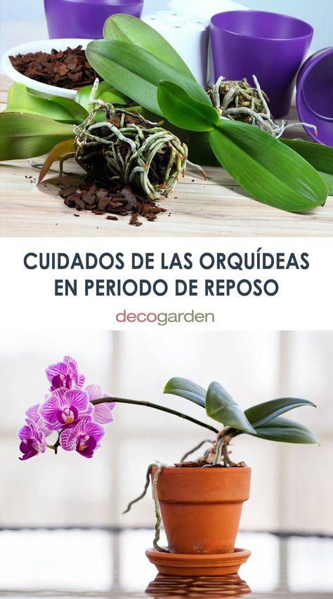 460 Ideas De Orquídeas Orquideas Cultivo De Orquídeas Plantas De Orquideas