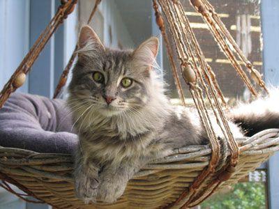 hanging cat cuddle pod   cat furniture corner and cat  rh   pinterest