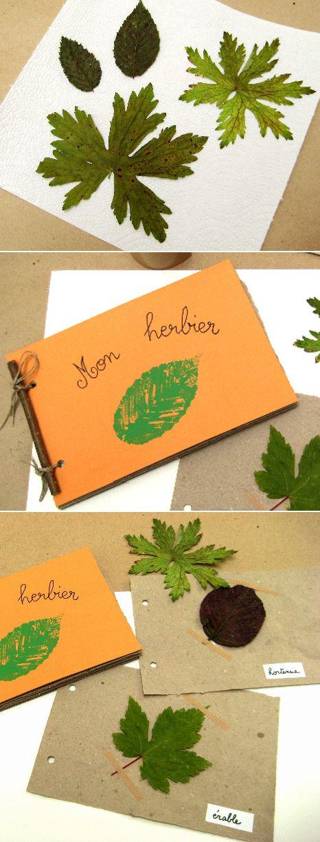 L'herbier d'automne - Suivez-moi sur mon nouveau blog http//:nanimeil.wordpress.com