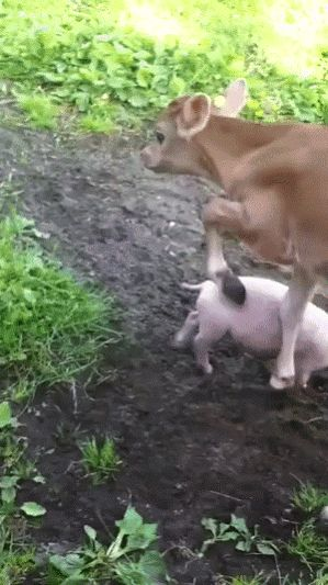 This is cute! I would love the simple life of a farm. Not a big farm... just my land, my animals and me.
