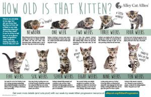 Alley Cat Allies How Old Is That Kitten Kitten Progression At A Glance Kitten Season Alley Cat Allies Newborn Kittens