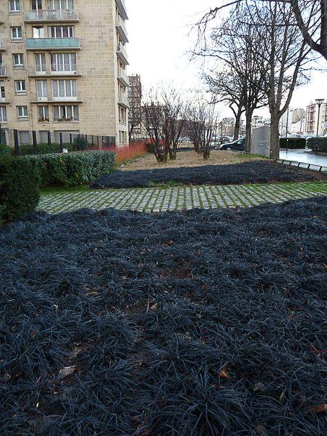 Tapis d\'ophiopogons noirs sur l\'avenue de la Porte de ...