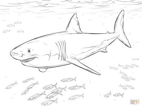 Malvorlagen Haifisch Ausmalbilder Aiquruguay