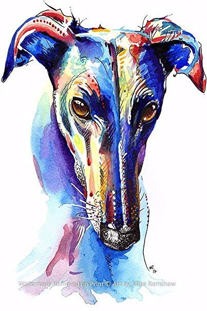 Greyhoundarts Windhunde Whippet Lurcher Hunde Italienisch Kunst