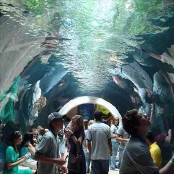 The Dallas World Aquarium. Had a great time enjoying the creatures that live in and around water around the world. One of the great features is the tunnel through the sharks!