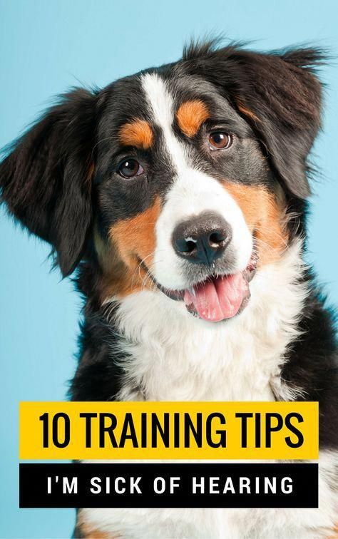 10 Dog Training Tips And Myths I M Tired Of Hearing Puppy Leaks