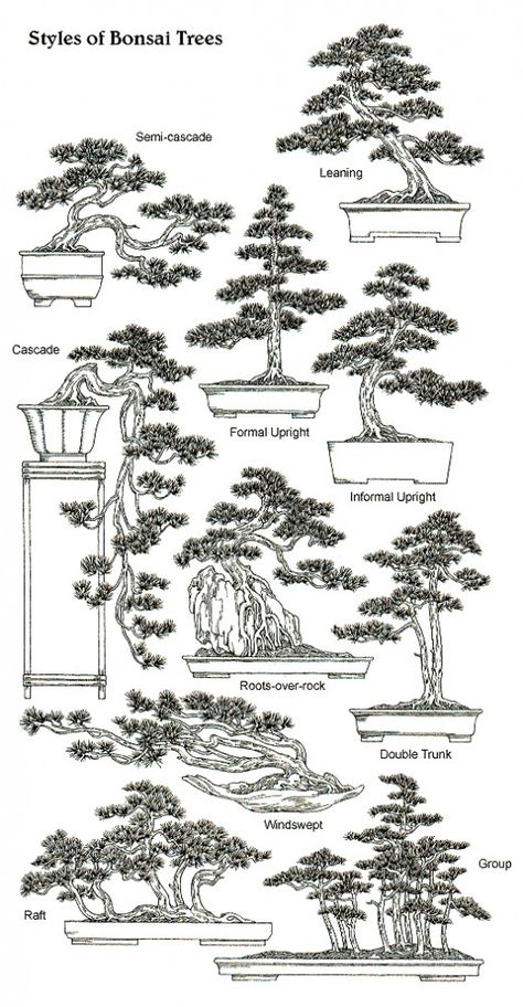 Bonsai is generally a tree or plant that has actually been kept smaller sized than its typical size. The technique to making a bonsai plant is to frequently prune the tree every spring Bonsai Tree Types, Bonsai Tree Care, Bonsai Plants, Bonsai Garden, Garden Plants, Wisteria Bonsai, Bonsai Pruning, Bonsai Ficus, Indoor Bonsai