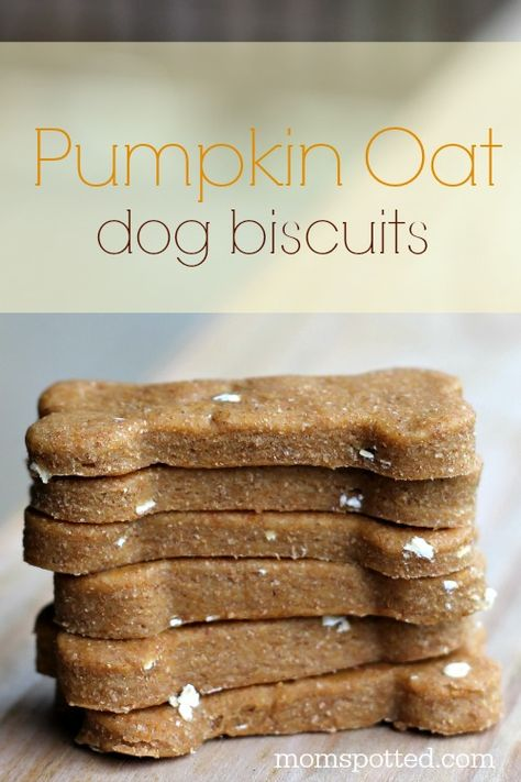 Dog Food Design Pumpkin Oat Biscuits Your Dogs Will Be Begging For! Food Design Pumpkin Oat Biscuits Your Dogs Will Be Begging For! Dog Biscuit Recipes, Dog Treat Recipes, Dog Food Recipes, Dog Biscuit Recipe Easy, Dog Safe Cake Recipe, Homemade Dog Cookies, Homemade Dog Food, Homemade Dog Biscuits, Diy Dog Treats