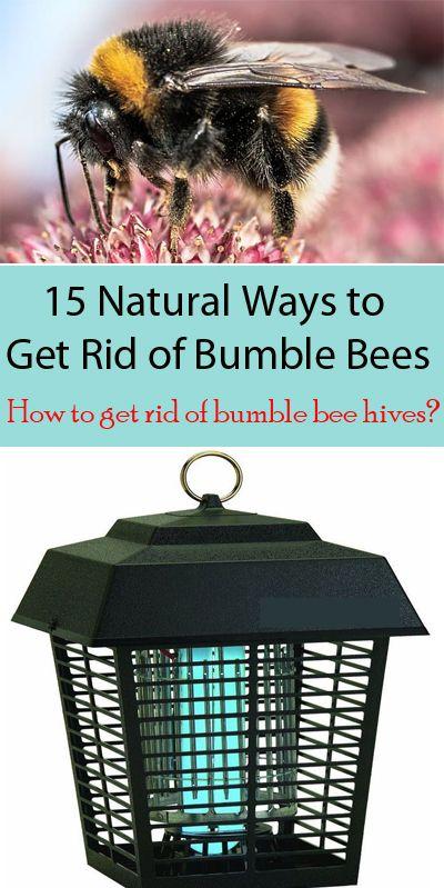 15 Natural Ways To Get Rid Of Bumble Bees Bumble Bee Nest Bumble Bee Bumble