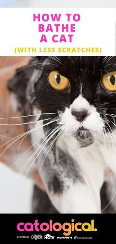 What Cat Grooming Tools You Need Cat Has Fleas Cat Fleas Cat Care