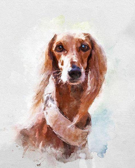 Saluki Art Print Original Watercolor Dog Portraits 8x10inc Hund
