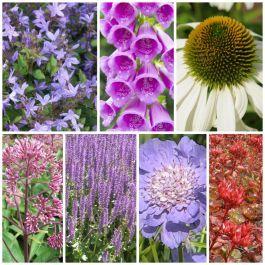 Bijen En Vlinder Border Pakket Planten Borders Vaste Planten