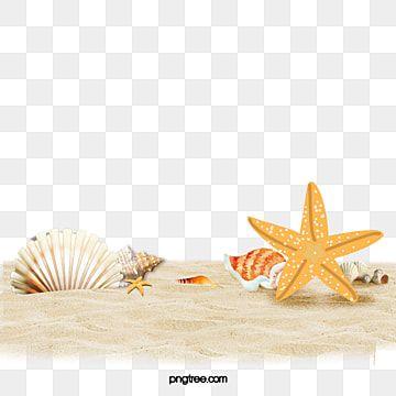 Beach Shell Starfish Png Transparent Clipart Image And Psd File For Free Download Em 2020 Ilustracao De Praia Ilustracoes Vetoriais Conjunto De Estrelas