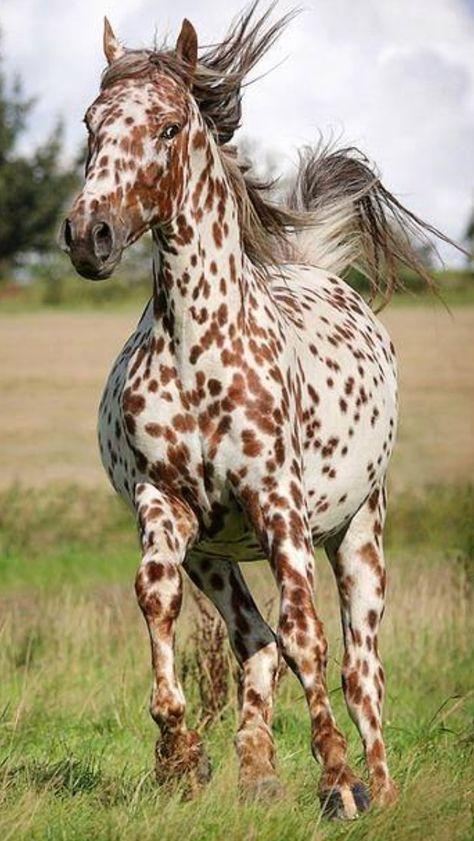 картинки рябых лошадей
