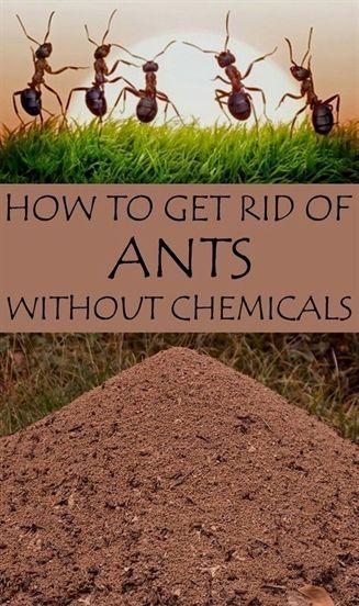 dbe8283cf0b4bc901c0098460f4494c6 - How To Get Rid Of Ants In Vegetable Garden Naturally