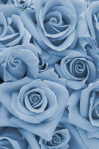 Photo Blue Roses Wallpaper Blue Flower Wallpaper Baby Blue Aesthetic